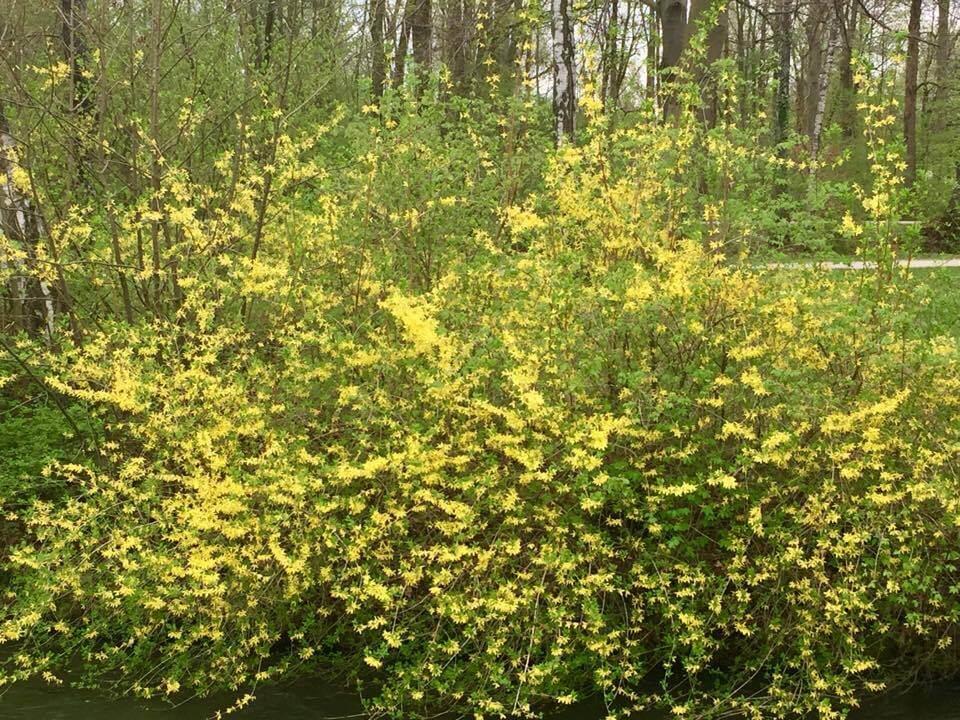 Gelber Blumenstrauch